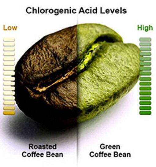 green coffee bean roasted unroasted chlorogenic acid levels