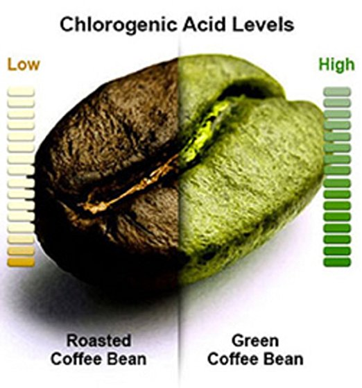 Green Coffee Bean roasted unroasted No Acid Coffee What Is Green Coffee Bean Extract